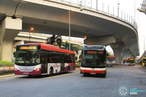 Singapore Buses at JB Sentral
