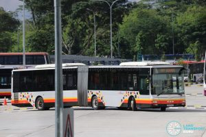 SBS Transit MAN NG363F A24 (SMB8004Y) - Training Bus